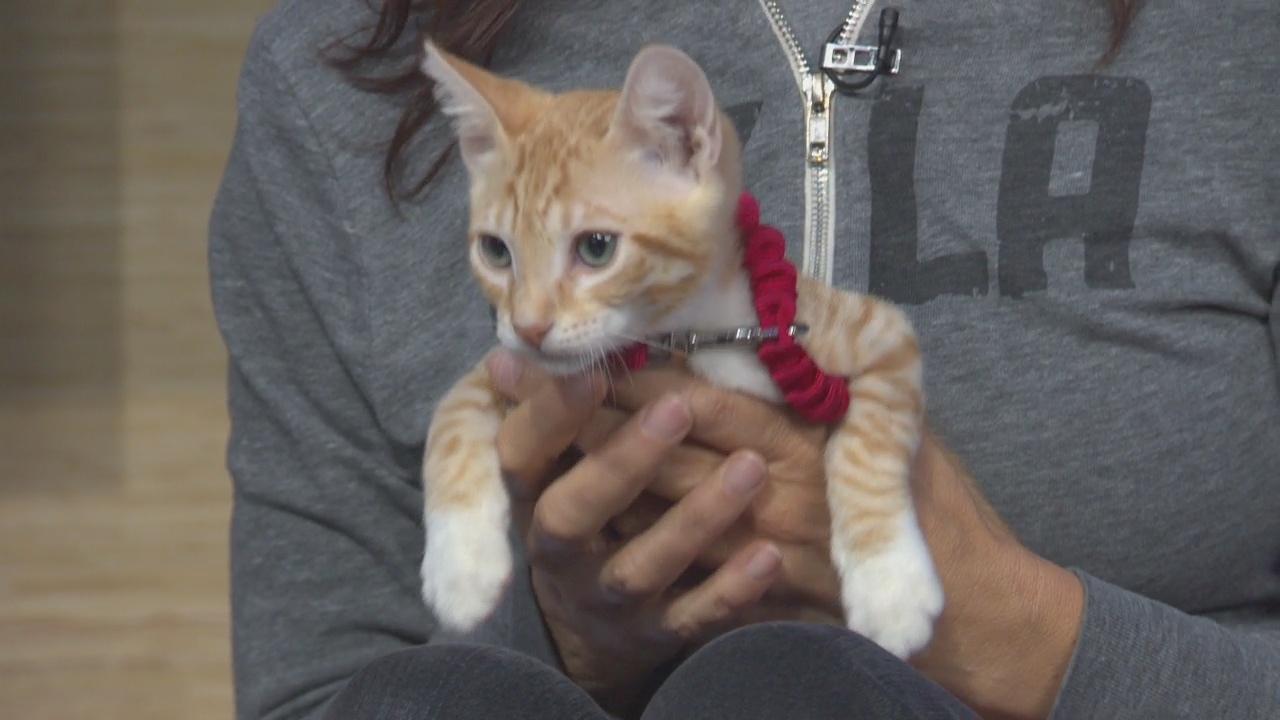 Pet Project: Simba from NKLA Pet Adoption
