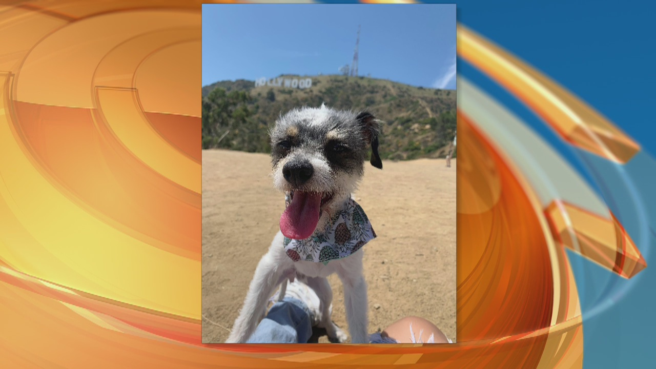 Pet Project Success Story: Davi from South LA Animal Shelter