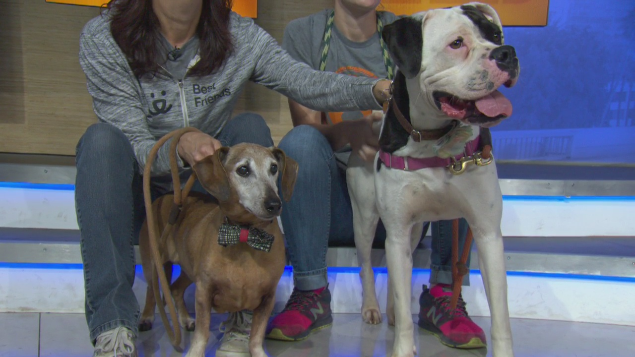Pet Project: Bonnie and Clyde from Best Friends Animal Society
