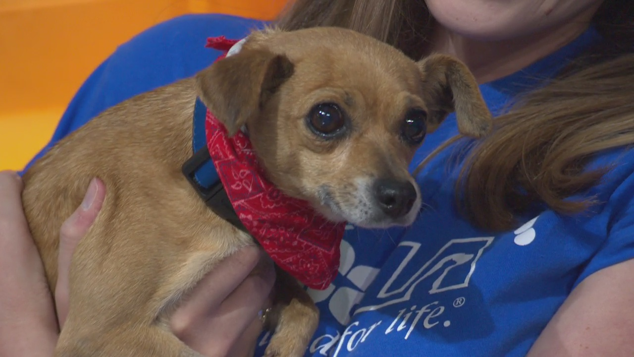Pet Project: Sandy from spcaLA