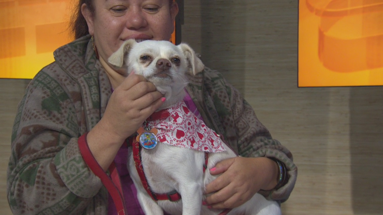 Pet Project: Charlie from Ken-Mar Rescue